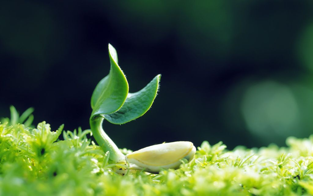 Plant-Growing-Nature-Picture-Hd-Wallpaper-Background